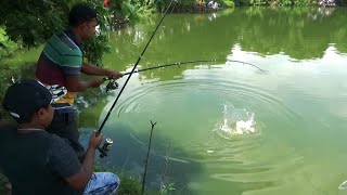 Robust Grass Carp Fishing Videos In Pond Of Litchi Garden