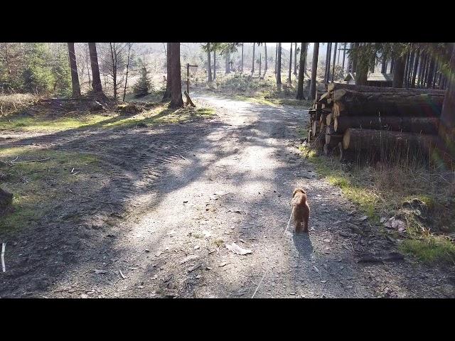 (Film 19) Rundweg von Rehsiepen zur Esenbeck, Rellmecke, Obersorpe.
