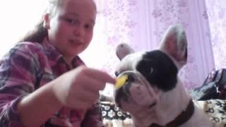 Моя собака Моник !!!(, 2014-09-16T09:55:01.000Z)