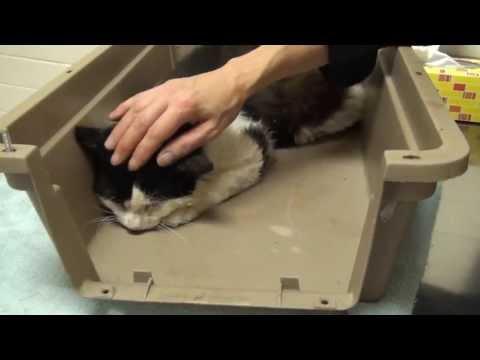 Putting Tom to Sleep - Pet Program - Tom's Box