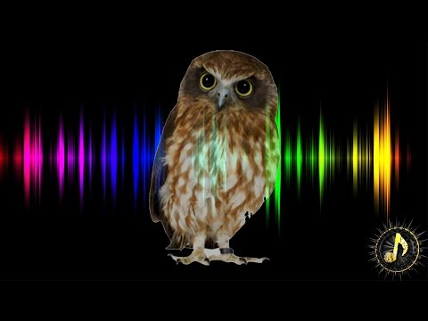 Owl Hoot Sound Effect