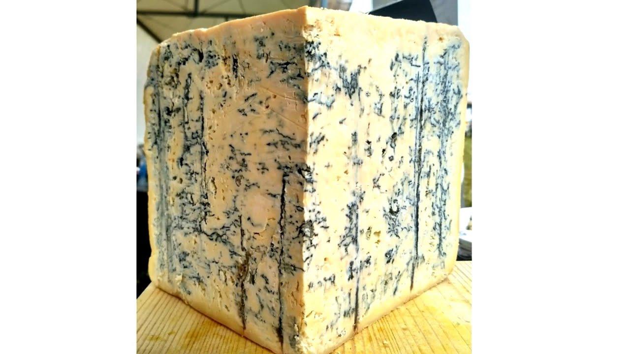 Польза и вред сыра с плесенью. Можно ли детям есть сыр с плесенью?