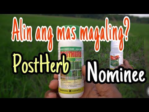 ANO ANG MABISANG PAMATAY DAMO SA PALAYAN | Mabisang pamatay damo, Nominee One o Postherb