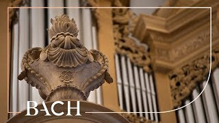Bach - Sonata in E-flat major BWV 525 - Zerer | Netherlands Bach Society
