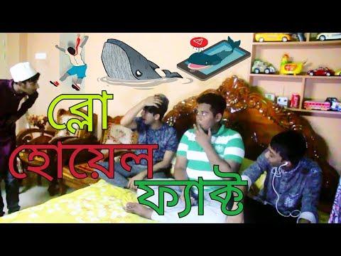 Blue Whale Fact -ব্লু হোয়েল   বুলু হোলিল-Bangla Funny video The Aylsha King's
