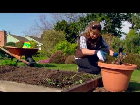 Starting a Vegetable Garden - Gardening Tips From Canadian Tire