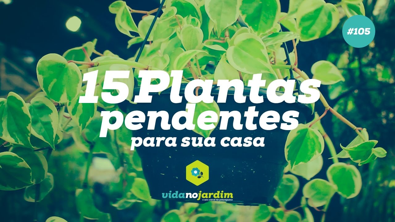 15 plantas pendentes para sua casa 105 youtube - Tipos de plantas de exterior ...