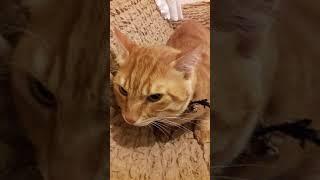 Sahibine kızan kedinin intikamı 2.bölum