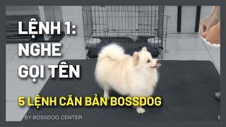 Cách huấn luyện chó cơ bản (#1)Dạy chó nġhe chủ gọi tên | Hướng dẫn cнi tiết dễ làm | BossDog