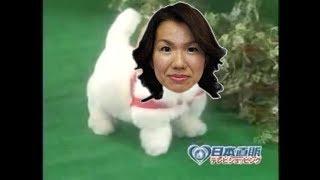 愛犬ロボ「豊田真由子様」