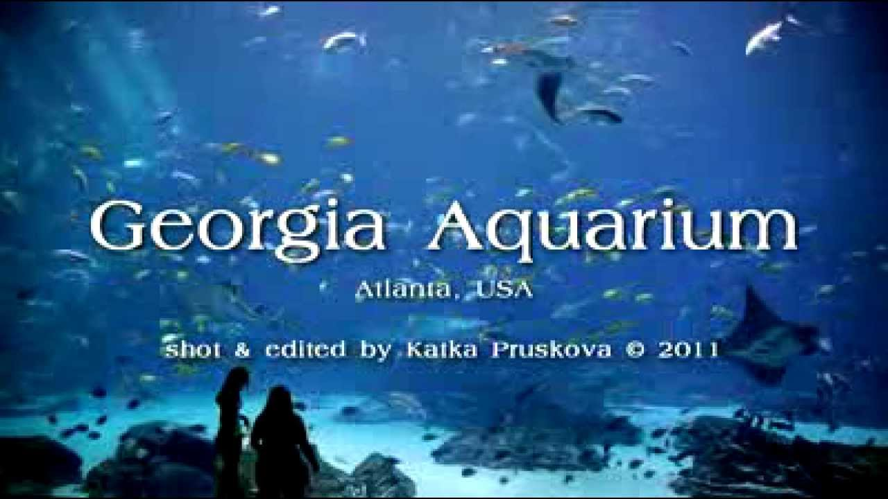 The Georgia Aquarium Funny Images Gallery