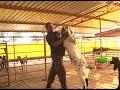 Success Story of a Goat Farmer in Karnataka | Krishidarshana | DD Chandana