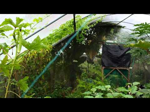 Organic Farming in Singapore.  Video 9 of 10