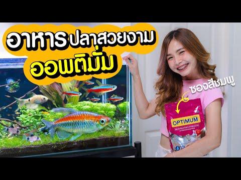 ให้อาหารปลาสวยงามในตู้ไม้น้ำ ด้วยอาหารปลาออพติมั่ม ซองสีชมพูกัน!!! | MarangMod Channel
