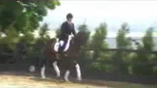 DayDream - Lostock Stud Stallion