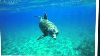 Детские клипы смотреть бесплатно   Песня про дельфинов