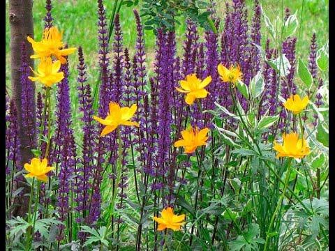 Видео Луговое растение