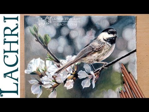 Caran d'Ache Luminance review & colored pencil demo w/ Lachri