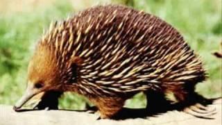 Смертельно опасные животные (приезжайте в Австралию)