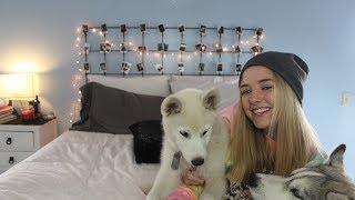 Furry Friend Tag | Maddi Bragg Thumbnail