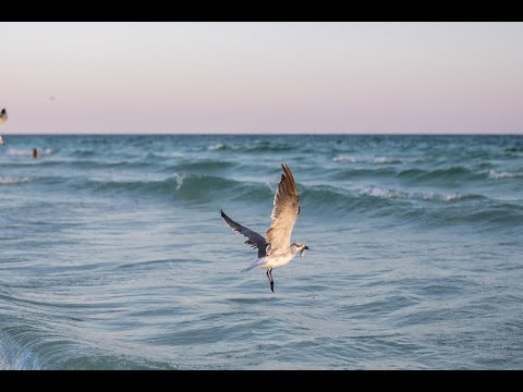 Miramar Beach – Destin, FL