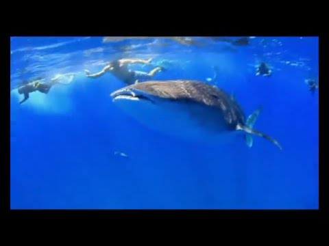 Beautiful diving in Mozambique - be a marine volunteer