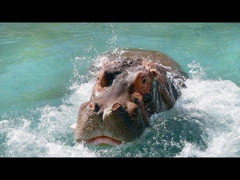 Hippo Adhama Splashes into Spring!