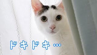 新しいルンバが我が家にやってきたときの猫の反応…!