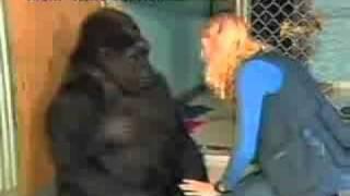 Quand na perd un ami... Amitié entre un gorille et un chaton