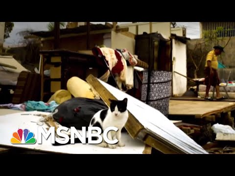 Incompetence And Deceit': Study Reveals True Death Toll In Puerto Rico | Deadline | MSNBC