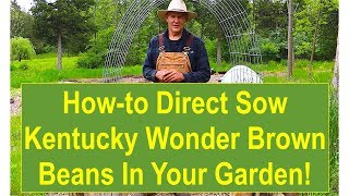Tips and Ideas on How-to Direct Sow Kentucky Wonder Brown Beans in Your Vegetable Garden
