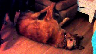 Archie The Golden Retriever's Exercises