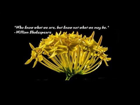 Inspirational quotes ♥ Motivational quotes☼ Beautiful flowers photos ♪ Relaxing Music! [Part 1]