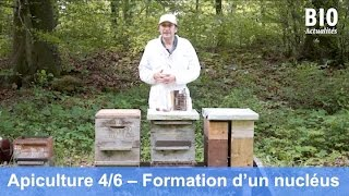 L'apiculture bio au cours de l'année – Formation d'une jeune colonie par essaimage (partie 4/6)