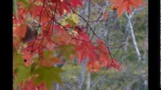「恋に降る雪」 作詞:田村和男 作曲:鈴木英明 元歌:原 たかし 1995年...