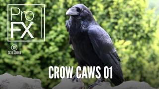 Crow Caws 01 | Animal Sound Effects | ProFX (Sound, Sound Effects, Free Sound Effects)