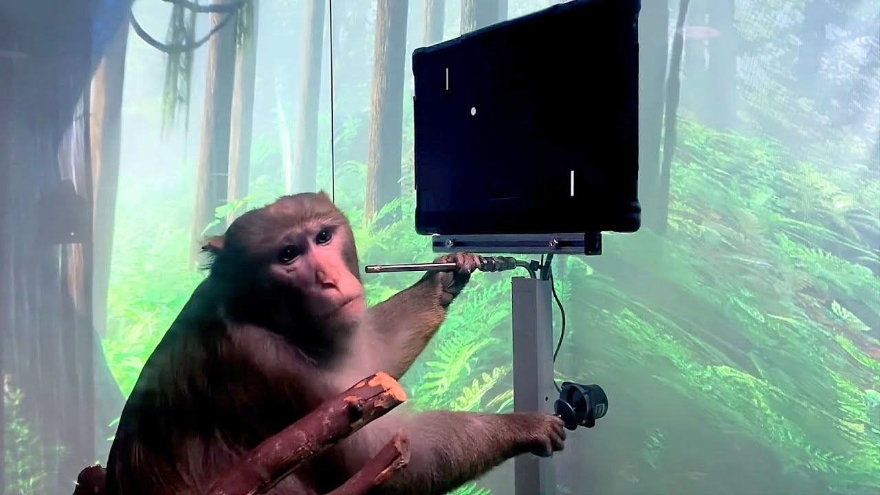 Elon Musk's Neuralink monkey brain demo explained