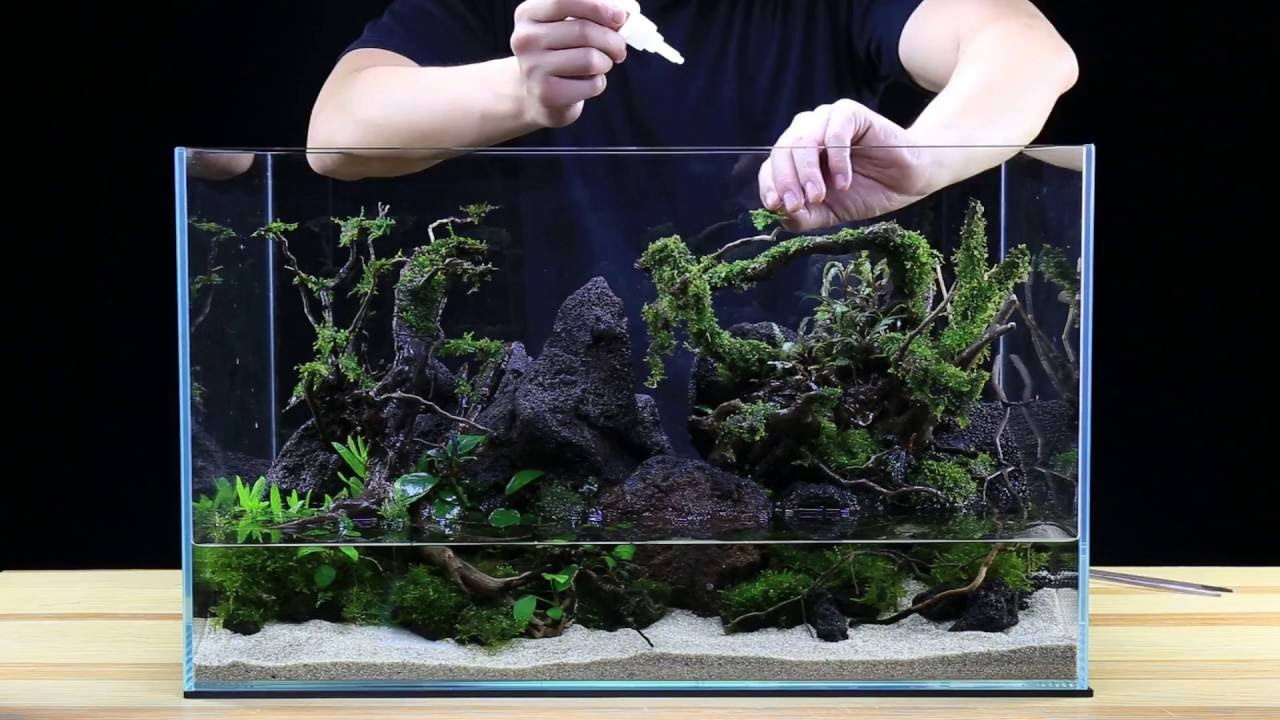 How To: Aquascape A 20G Tank   Team Buce Plant X Ultum Nature Systems    Skull Island   YouTube
