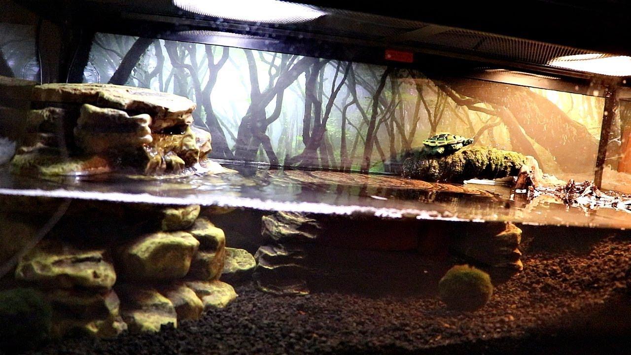 New Pet Turtle Tank Youtube