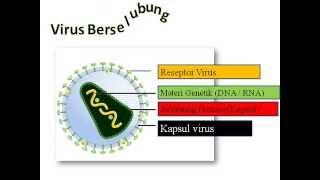 Animasi Struktur Virus