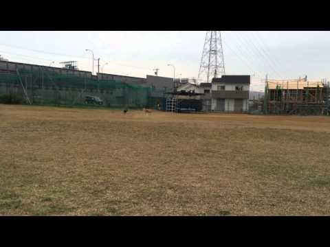 ボール遊び リヤンVSオセロ