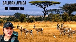 KIG 121| GAK NYANGKA SITUBONDO MIRIP AFRIKA!