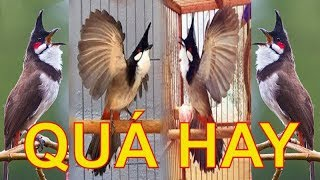 """""""Green Forest singer """" Birds chirping and nature sounds