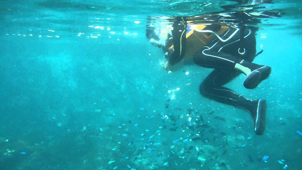 2014-06-28龍洞和美國小浮潛-浮潛餵魚秀-2(Hflee) - YouTube