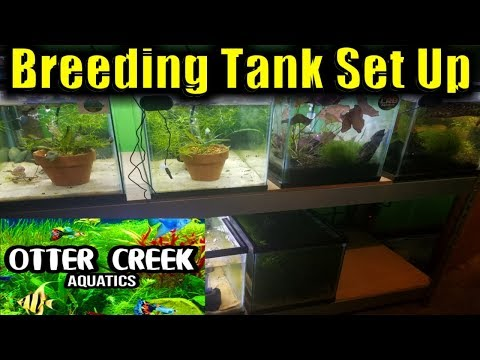 How To Set Up A Livebearer Breeding Tank | Livebearer Breeding | Breeding Fish For Profit