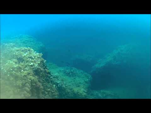 Chassse sous marine Barracuda St Jean Cap ferrat (aoùt 2015)