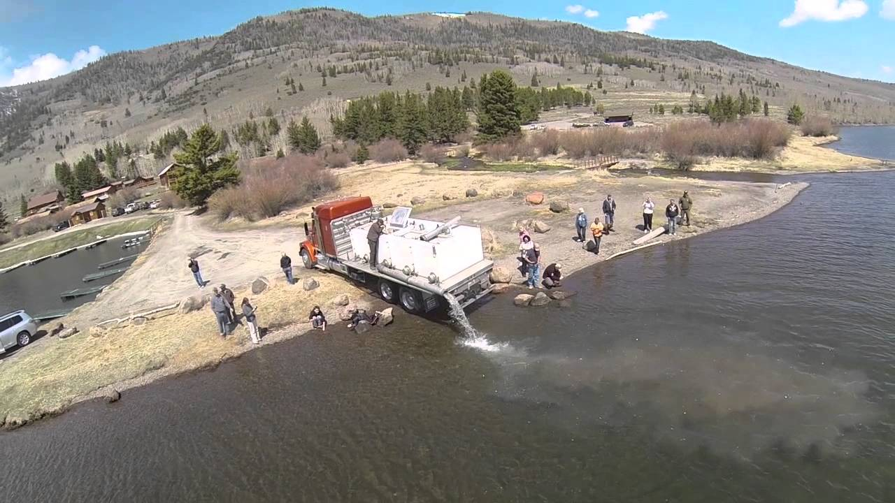 Kokanee salmon being planted in fish lake youtube for Utah fishing regulations