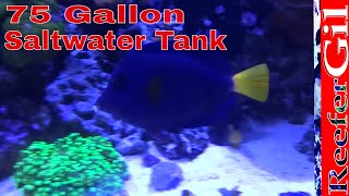 75 Gallon Saltwater Reef Aquarium Update- March 2014