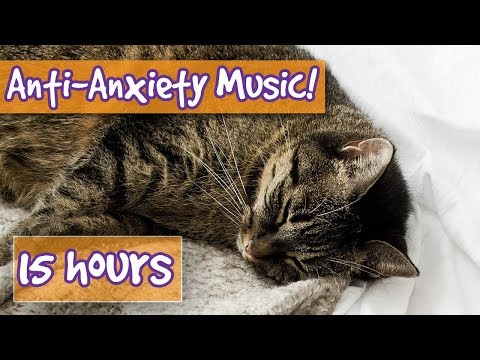 Longest Ever Relaxing Cat Music! 15 Hours Of Relaxing Music, How To Calm Cats With Anxiety!🐈 || NEW