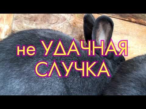 Вопрос: Как понять что крольчиха в охоте?
